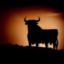 El toro indultado